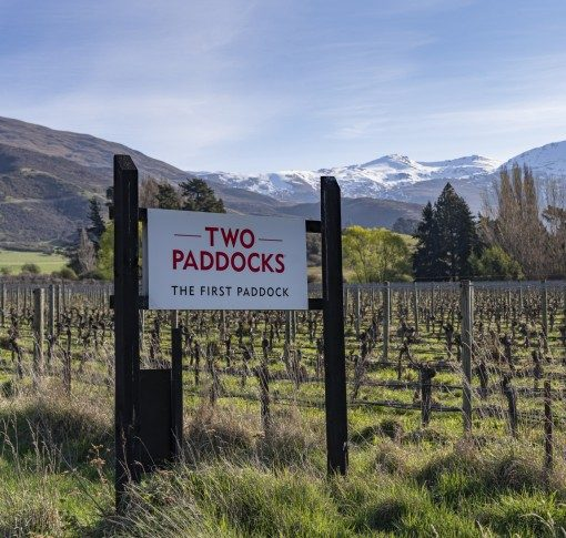 Sam Neill puts his acclaimed Gibbston vineyard up for sale